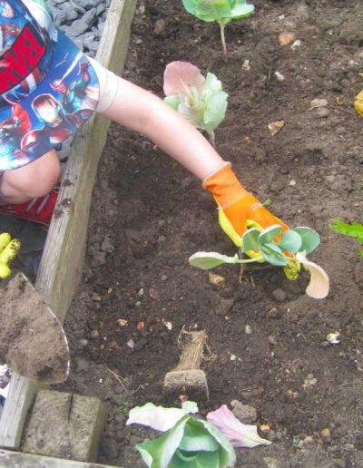 Oakwood Community Pre-school | Gallery | Child tending to the veg patch