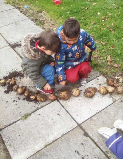Oakwood Community Pre-school | Gallery | Children lining out and counting all the potatoes grown in veg patch