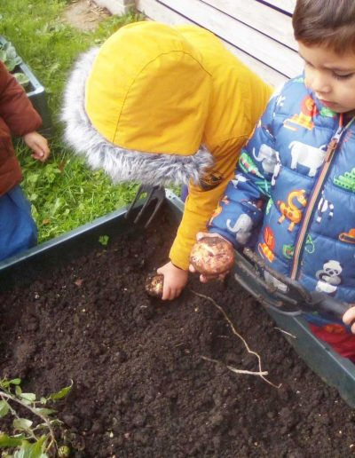 Oakwood Community Pre-school | Gallery | Child digging out potatoes